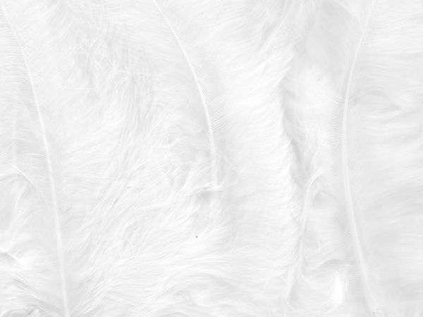 Fjær 15 stk - Hvit